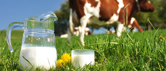 Jednoduchá fakta o mléku a mléčných proteinech